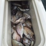 Porgies, Fluke, Sea Bass in Montauk